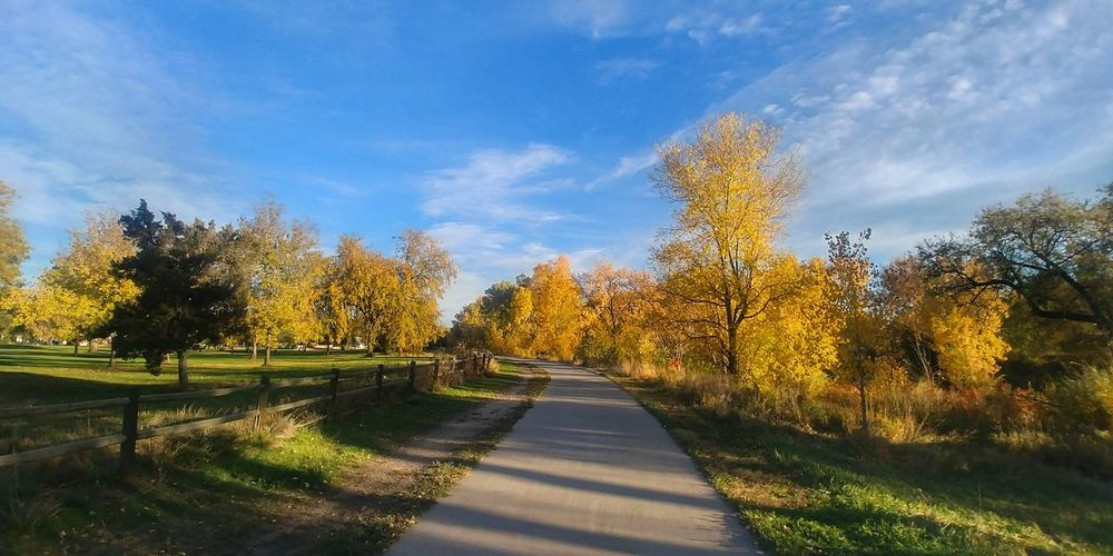 Sunlight Autumn Outdoors No People The Way Forward Yellow Nature Beauty In Nature Autumn Colors Landscape_Collection Beauty In Nature Leaves 🍁 Autumn🍁🍁🍁 Colorado Photography Landscape_photography Forest Sunlight