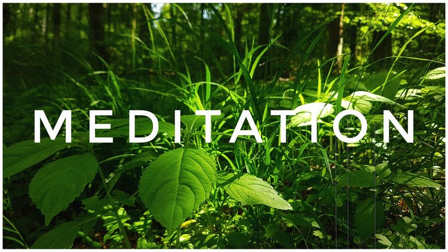 Meditation! Forest Forest Photography Plant WoodLand Treetrunk Green Color Love Beauty In Nature Beautiful Earth Nature Nature Photography Naturelovers Light And Shadow Growth Sunny Calmness Of Nature Backgrounds Leaf Text Close-up Plant Green Color Cultivated Land