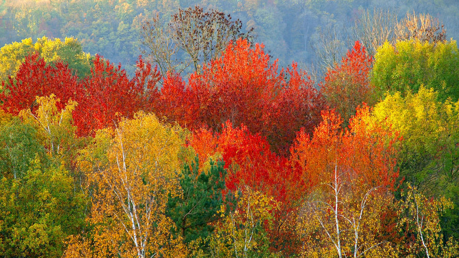 View of autumn trees in forest