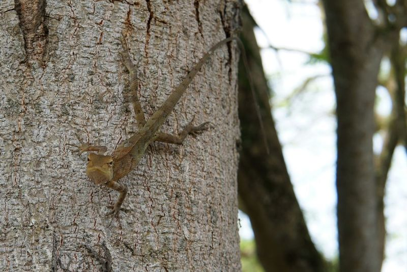 mad lizard on the tree with bokeh effect Wood Lizard Lizard Watching Mad Angry Lizard Blurred Motion Bokeh Photography EyeEm Best Shots EyeEmNewHere EyeEm Nature Lover Eye4photography  Textured Effect Single Outdoors Outdoor Photography Tree Trunk Tree Nature Day Outdoors No People Textured  Close-up