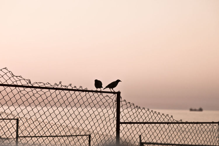 Silhouette birds perching on fence against sky during sunset