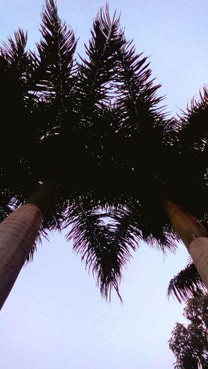 Skytree Amazingnature