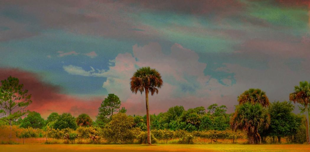 Florida Landscape I'm working with some old photos because I can't upload from my camera - major bummer! I hook up the connection... no upload! Aaarghh! Sable Palm Centerpiece this edit has an Old Timey Post Card Feel maybe a little Nod To Maxfield Parrish Sanguine comes to mind The Great Outdoors - 2017 EyeEm Awards