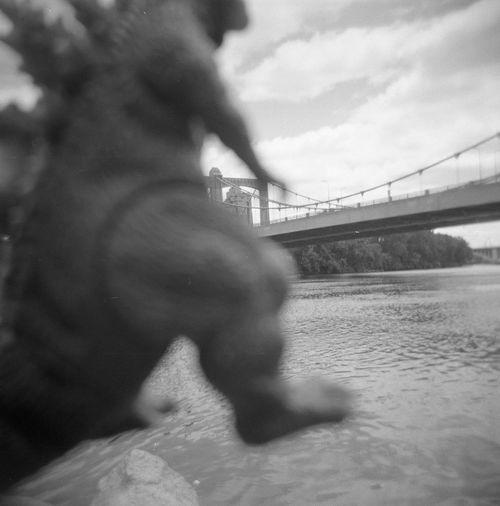 Godzilla vs Hennepin Bridge. Godzilla series project for Holgaweek Holga