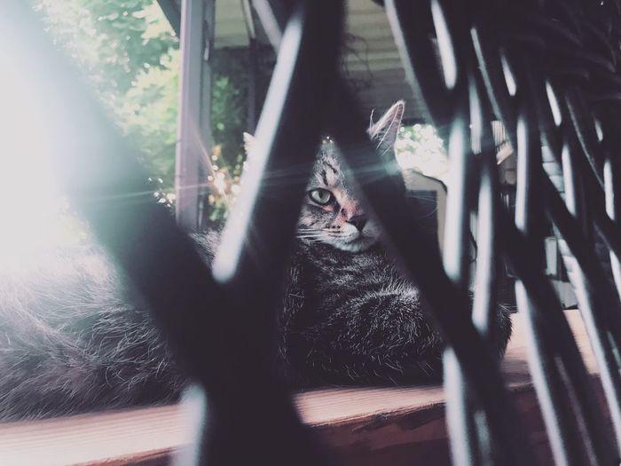 Portrait of cat relaxing on window