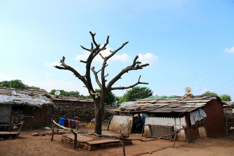 Tree Plant Nature Table Sea Outdoors No People Day Indian Culture  Vulnerable Tribe India Tribal Village Village Life Tribal Primitive Tree Sky Nature Tribes Village Scene Village Photography Villagescape