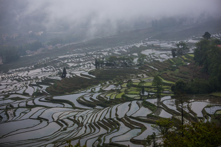 Scenic view of rice paddy against sky