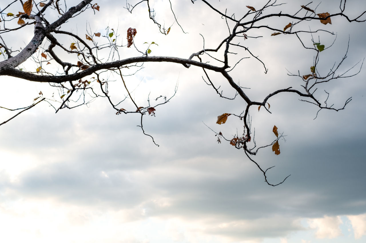 sky, tree, branch, plant, cloud - sky, low angle view, nature, no people, beauty in nature, day, growth, tranquility, outdoors, bare tree, animal wildlife, fruit, bird, leaf, animals in the wild, twig