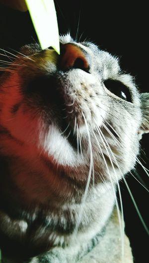 Hi! Catlover ♡ My Cat Eyem Cute Cats Cute Cats Cat♡ Cat I Love My Cat ❤ Catoftheday
