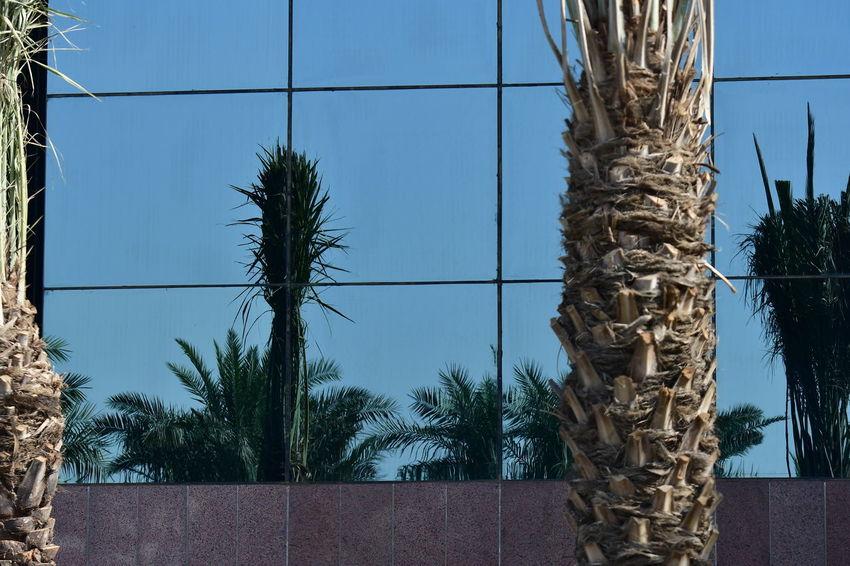 Riyadh Buildings City City Street Cityscape Modern Architecture Reflection Riyadh Riyadh KSA Riyadh City Riyadh Saudi Arabia Architecture Building Exterior Built Structure City Main Road Glass - Material Glass Building Glass Building Window Reflection Glass Buildings Glass Reflected The Refracted Glass Structure Main Road Modern Builing Modern City Nature No People Riyadhphotographer