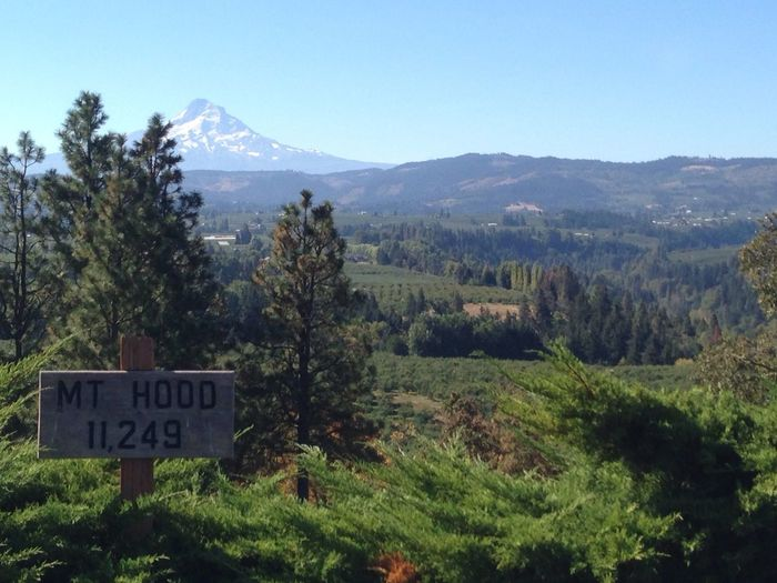 Mt hood panarama pt oregon