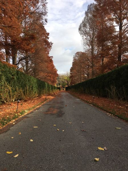 Fall LongwoodGardens Path Sky And Clouds Trees Tree The Way Forward Sky Outdoors Nature Road Day Treelined Autumn No People Scenics Beauty In Nature Tranquility Cloud - Sky