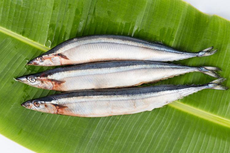 Fresh Japanese Sanma fish on leaf Fresh Fruit Bowl Autumn Japanese Food Sanma Seafood Banana Leaf Fish Food Food And Drink Healthy Eating Mackerel Raw Food Seasonal Studio Shot