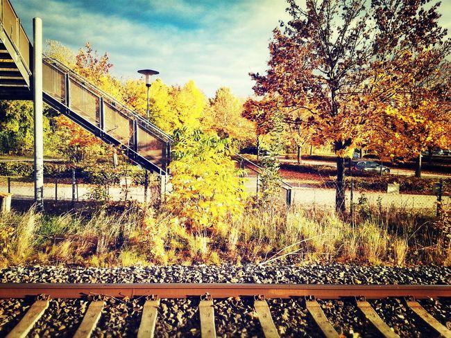 Autumn Colors Autumn Train Autumn Collection