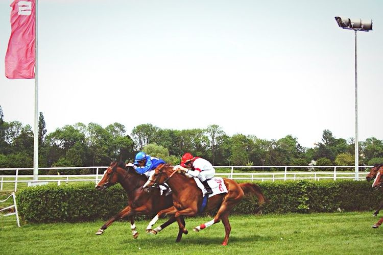 Snapshots Of Life Race Horse Racetrack Horserace Summer Fun Moment Beautiful Day