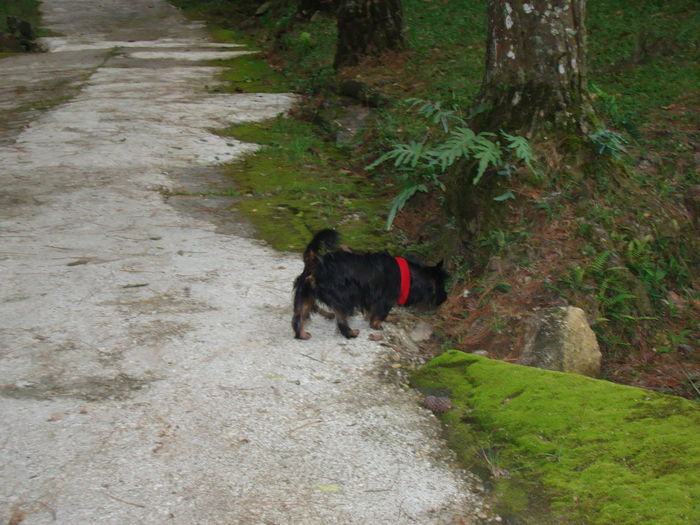 Rear view of dog on dirt road