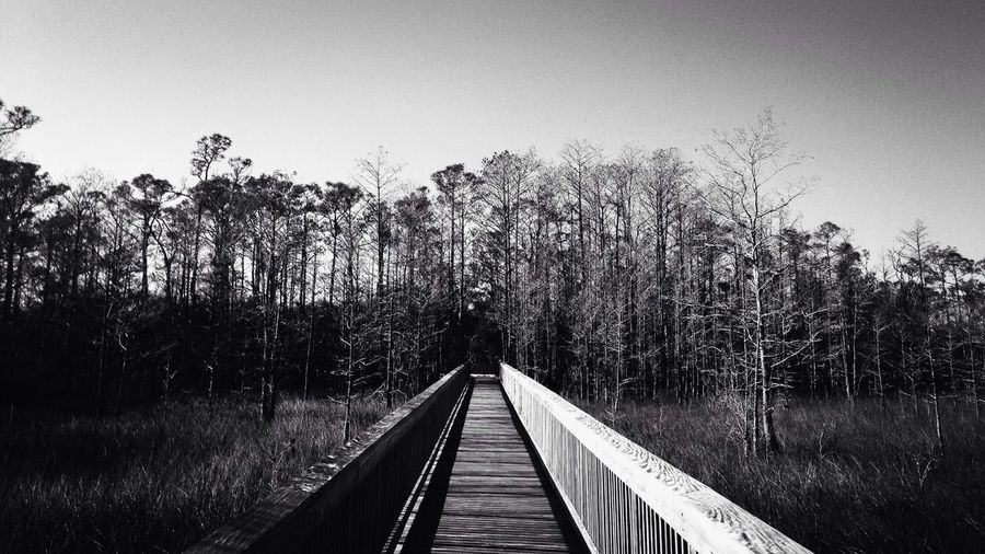 Boardwalk Amidst Trees Against Clear Sky At Forest