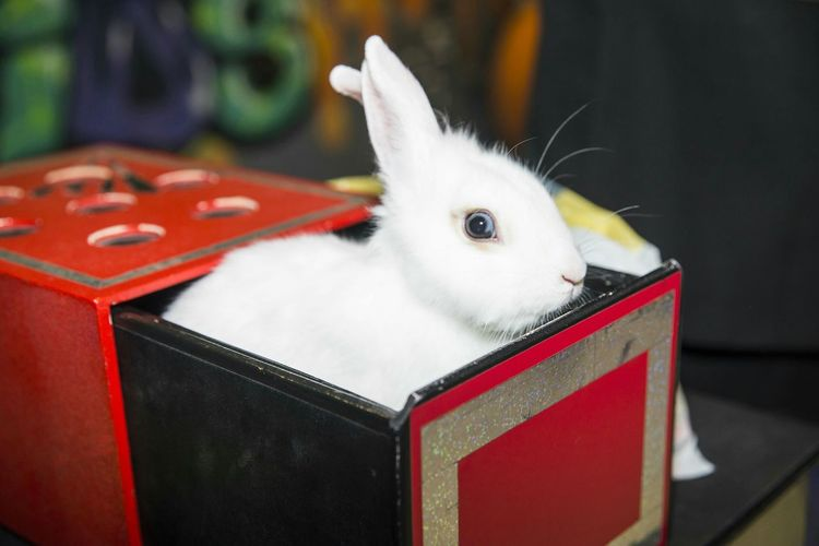 Close-Up Of White Rabbit In Container