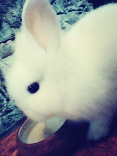 Bunny, La Soledad Y Yo