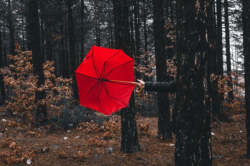 Red umbrella on sidewalk in forest