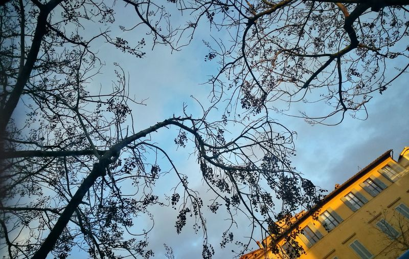 Siena Punti Di Vista Colori Dell'inverno Tranquility Smartphonephotography Contrasti Nature_collection Low Angle View Tree Sky Branch No People Growth Architecture Building Exterior Nature Outdoors