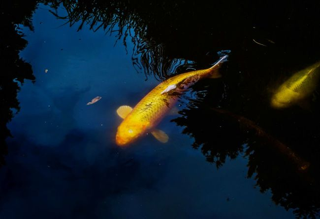 Underwater Fish Pond Pond Life Swimming No People Animal Themes Outdoors Nature