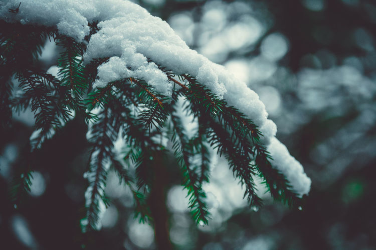 Merry Christmas to all who celebrates ! Christmas Frozen Green Ice Melancholic Landscapes Nature Rain RainDrop Tree Weather Winter Blur Bokeh Cold Temperature Contrast Day Europe Forest Germany Landscape Moody Outside Snow Snowflake White