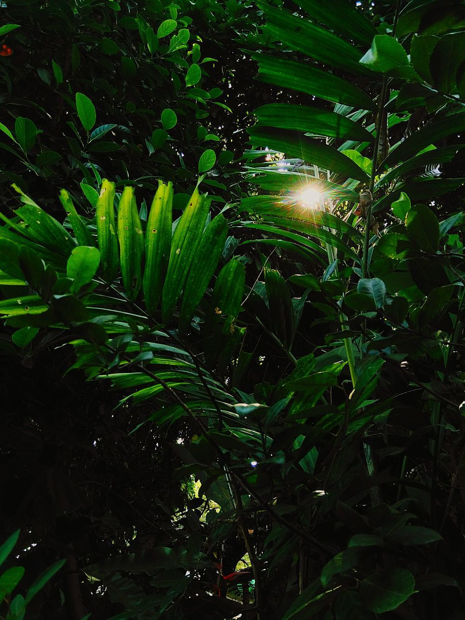 growth, green color, plant, nature, leaf, no people, outdoors, night, beauty in nature, freshness, close-up, fragility, flower
