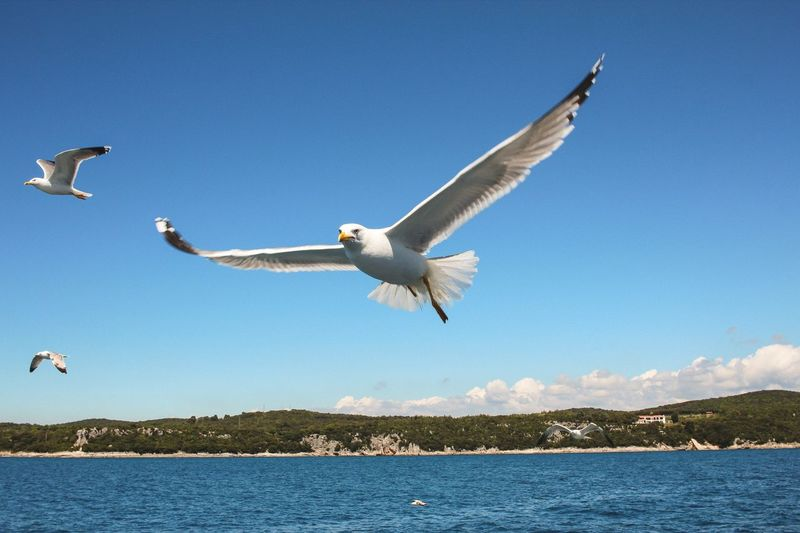 Seagull flying over lake against clear sky