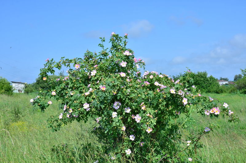 Flowering plants and trees on field against sky