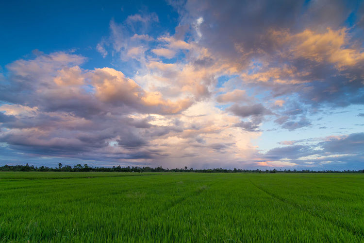 Aerial View of Green Rice Field in Nakhonphanom Thailand at Sunset. Landscape Environment Scenics - Nature Sky Field Beauty In Nature Land Cloud - Sky Agriculture Rural Scene Tranquil Scene Green Color Tranquility Plant Growth Nature Grass Crop  Farm No People Outdoors