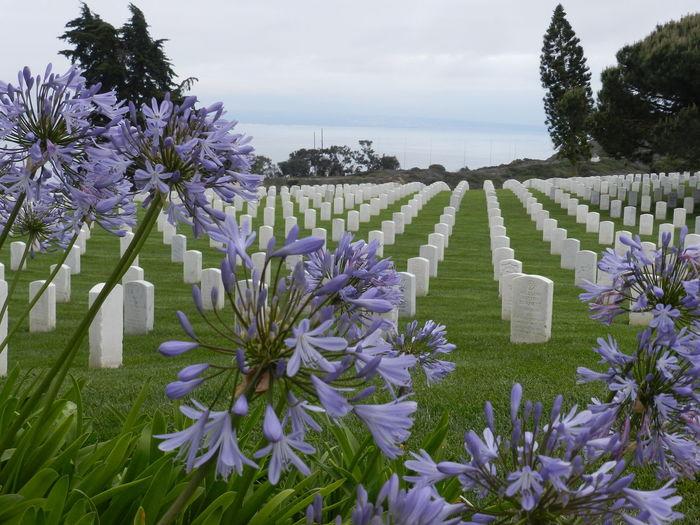 Cemetery Death Patriotic Graveyard Honor Outdoors Petal Purple Stone Veterans War