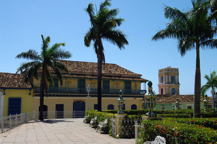 Architecture Cuba Trinidad Architecture Building Building Exterior Built Structure Caribbean City Clear Sky Coconut Palm Tree Colonial Architecture Colonization Day Footpath Growth Main Square Nature No People Outdoors Palm Tree Plant Sky Tourism Travel Destinations Tree Tree Trunk Tropical Climate Trunk