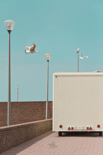 Seagull on street against clear sky with food track