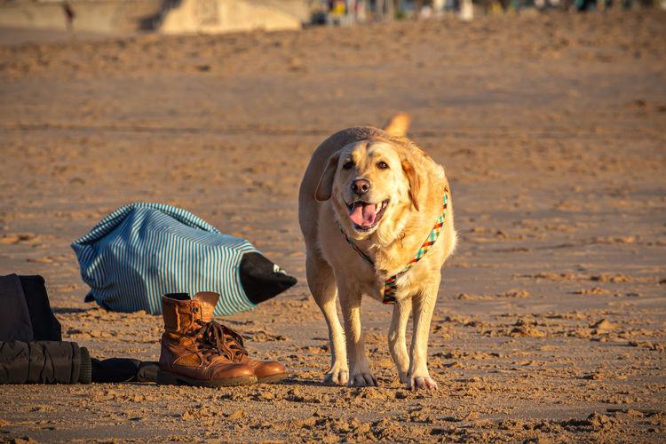 Dog standing on sand