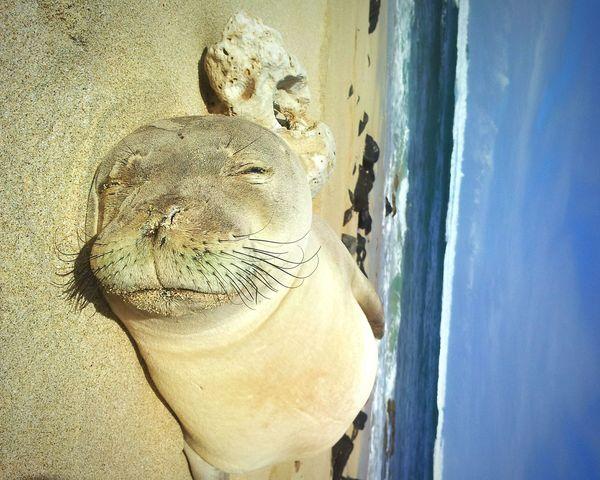 Sunshine Sea Sealove Hawaii Life Oceanlife Animal Photography