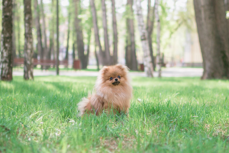 Small dog on field