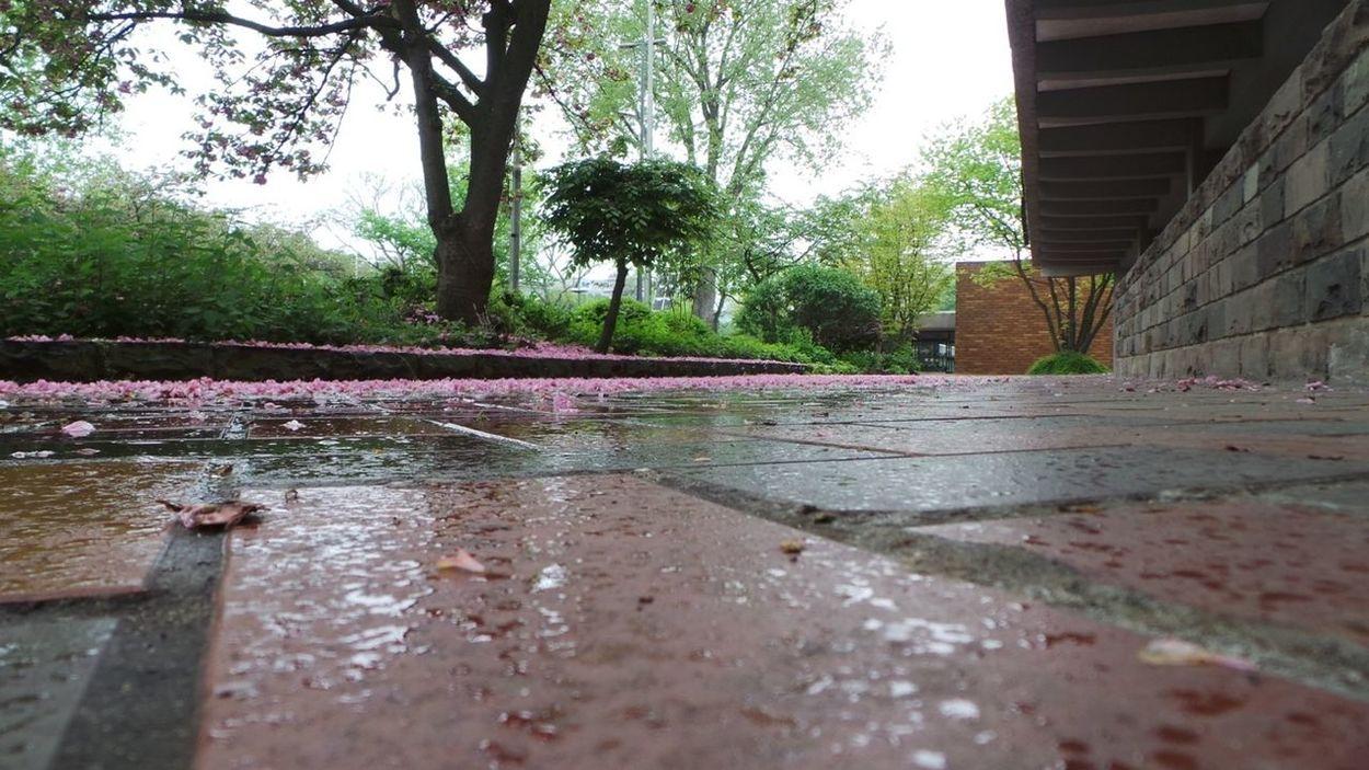 Rainy Day Köln EyeEm Best Shots - No Edit WeatherPro: Your Perfect Weather Shot