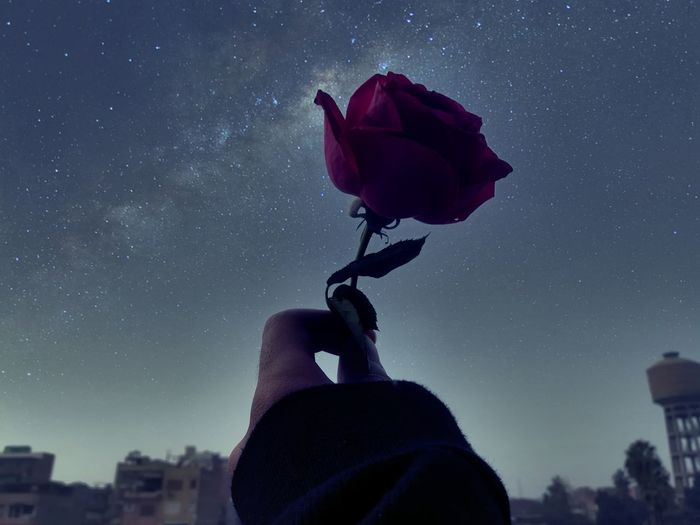 Cropped hand of woman holding rose against sky