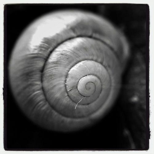 EyeEm Macro Bnw Photography Tiny Shells Eye Em Nature Lover