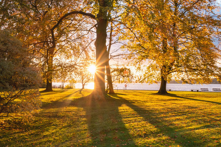 Sunlight streaming through trees in park during autumn