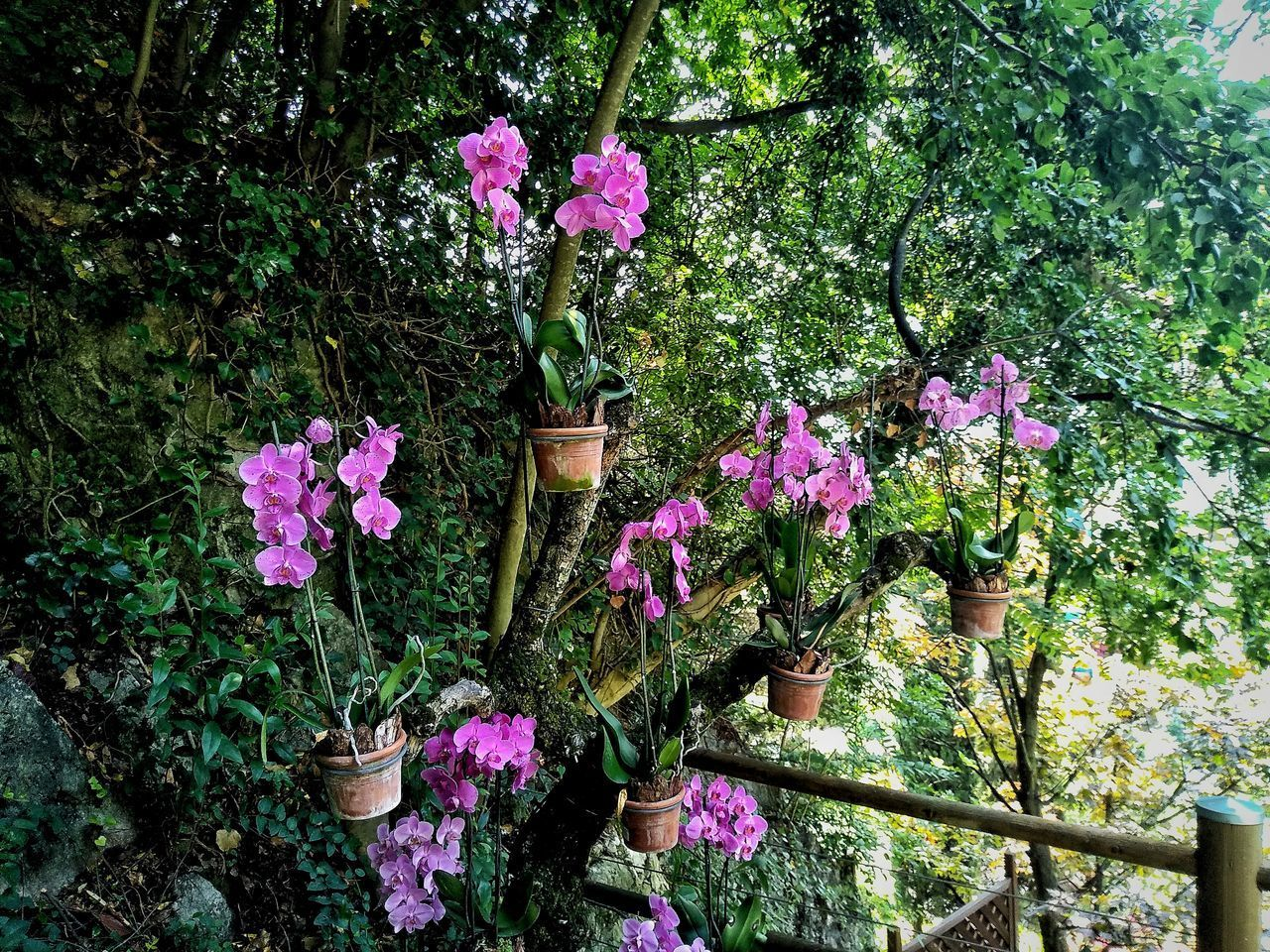 CLOSE-UP OF PINK FLOWERING PLANTS AGAINST TREES