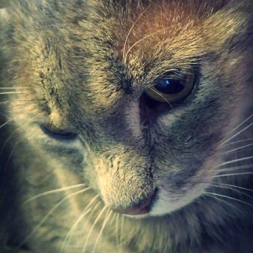 Zico Cat ♡