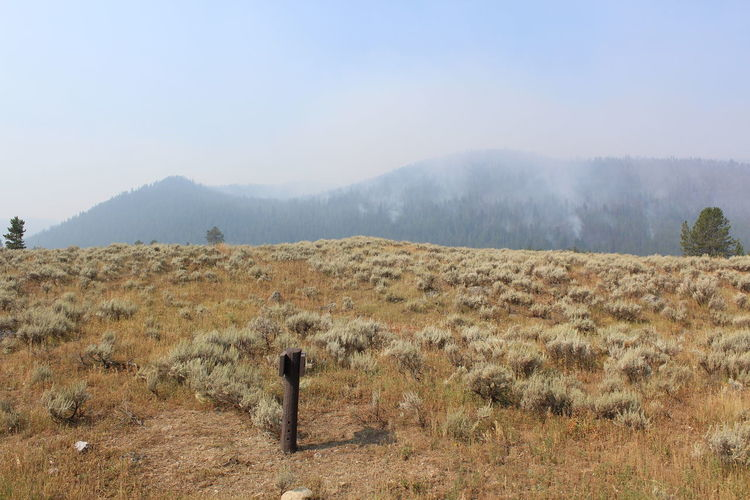Scenic view of field of wildfires burning