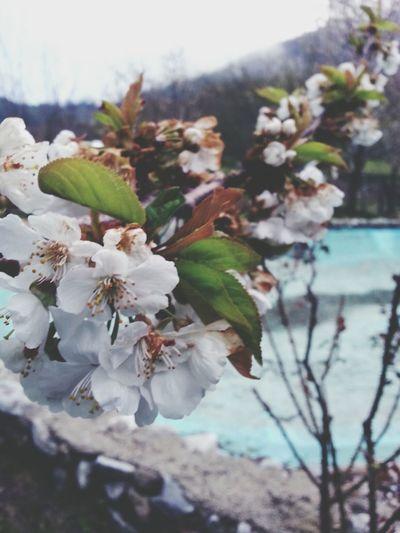 plastica primaverile Flowers Nature Spring Sunny Days