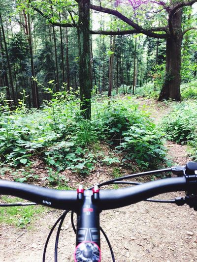 Mountainbike Trip In The Woods
