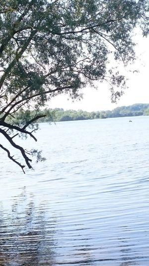 Bird Water Tree