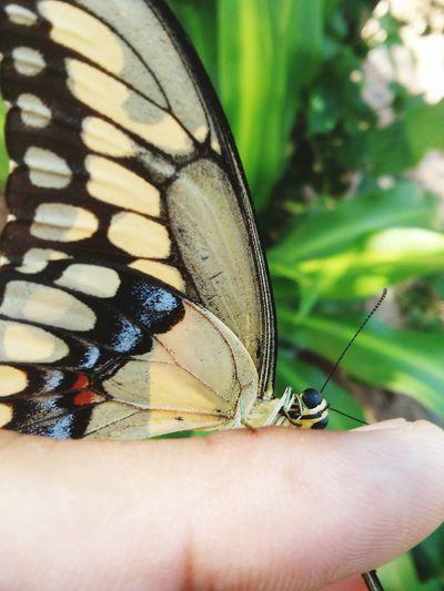 Contacto animal, paz con ellos. Vida Campos Nationalgeographic Mariposa Groves Respeitoavidaanimal