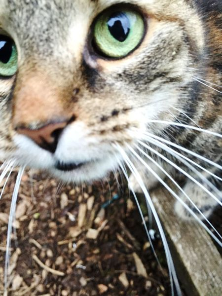 Neugierig? Ein wenig. Cat Domestic Cat Pets Feline Close-up Whisker Staring Animal Eye Animal Head  Curiosity