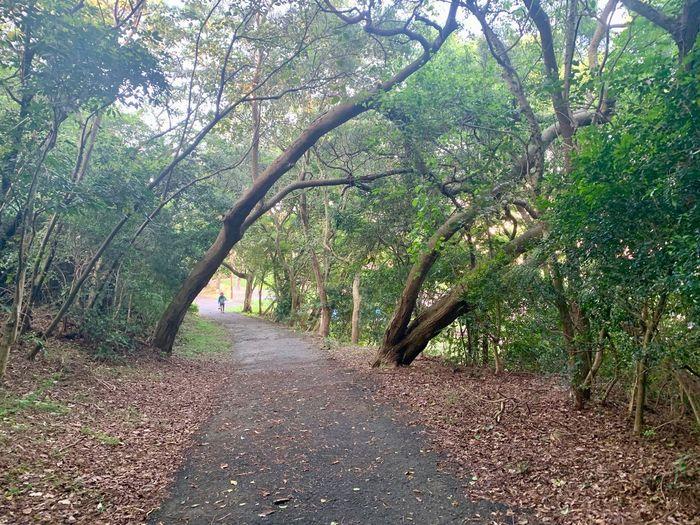 Tree Direction